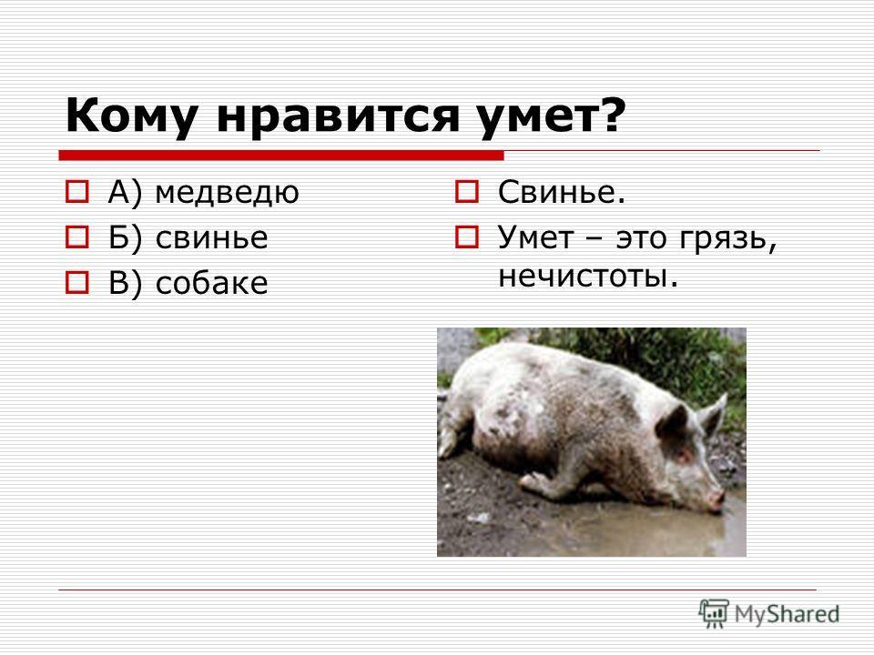 Кому нравится умет? А) медведю Б) свинье В) собаке Свинье. Умет – это грязь, нечистоты.