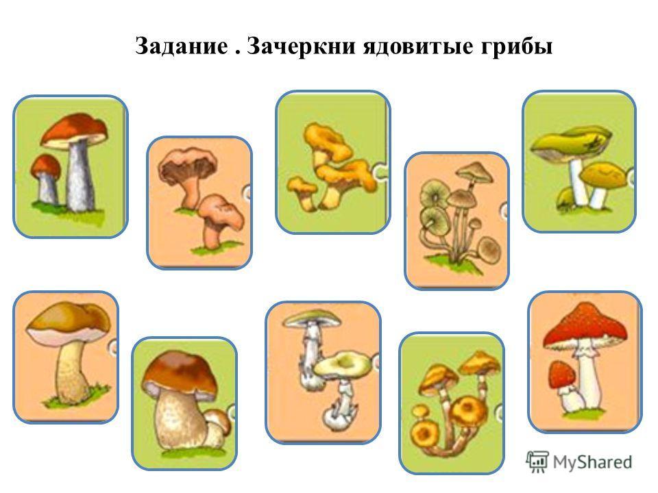Задание. Зачеркни ядовитые грибы