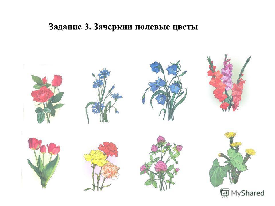 Задание 3. Зачеркни полевые цветы