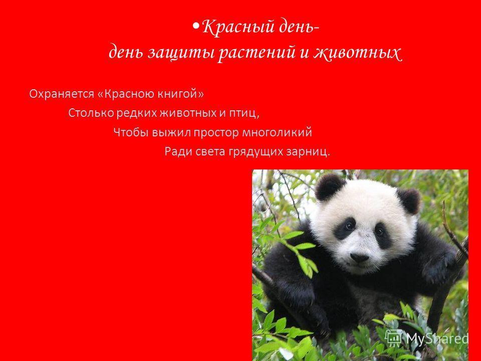 Красный день- день защиты растений и животных Охраняется «Красною книгой» Столько редких животных и птиц, Чтобы выжил простор многоликий Ради света грядущих зарниц.