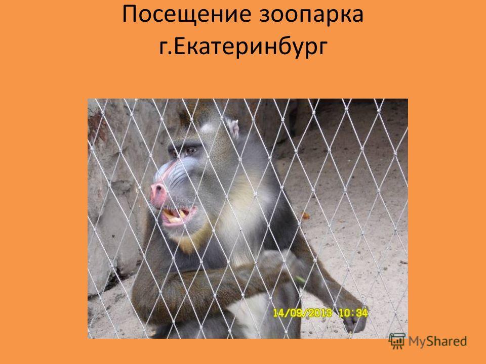 Посещение зоопарка г.Екатеринбург