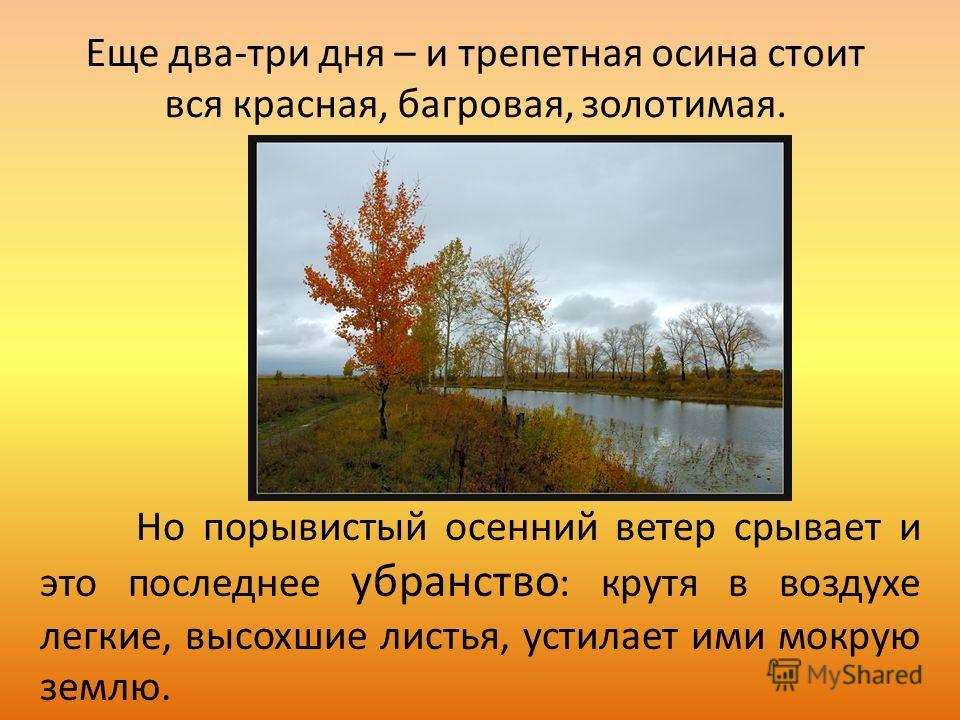 Еще два-три дня – и трепетная осина стоит вся красная, багровая, золотимая. Но порывистый осенний ветер срывает и это последнее убранство : крутя в воздухе легкие, высохшие листья, устилает ими мокрую землю.