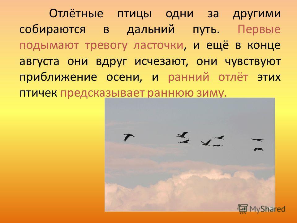 Отлётные птицы одни за другими собираются в дальний путь. Первые подымают тревогу ласточки, и ещё в конце августа они вдруг исчезают, они чувствуют приближение осени, и ранний отлёт этих птичек предсказывает раннюю зиму.