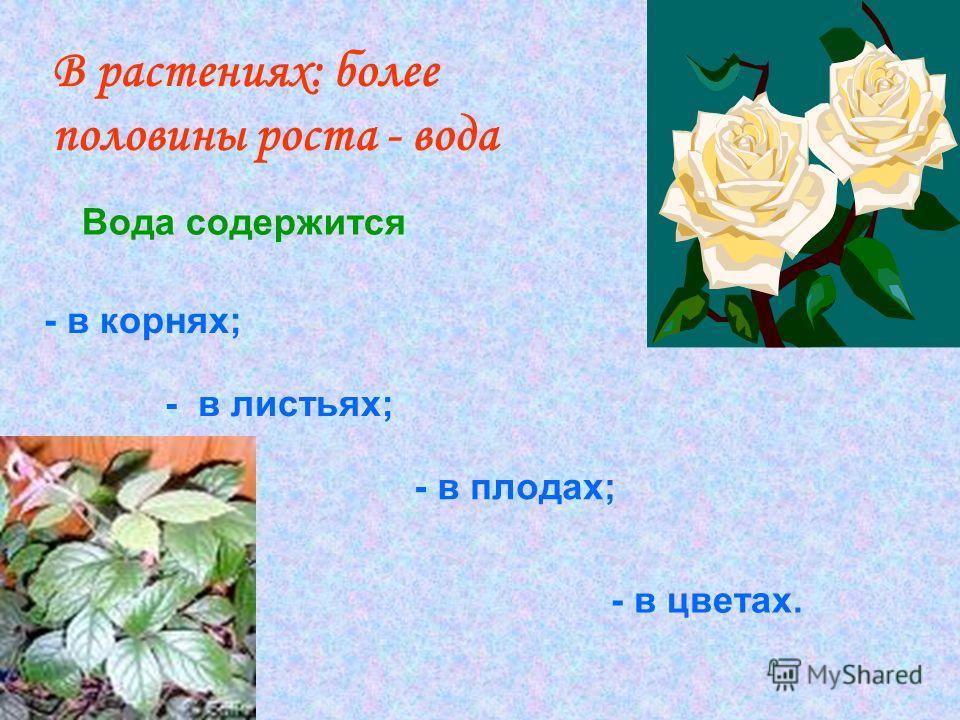 В растениях: более половины роста - вода Вода содержится - в корнях; - в листьях; - в плодах; - в цветах.