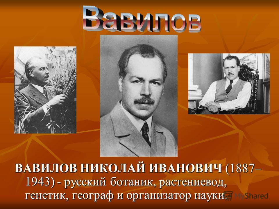 ВАВИЛОВ НИКОЛАЙ ИВАНОВИЧ (1887– 1943) - русский ботаник, растениевод, генетик, географ и организатор науки.