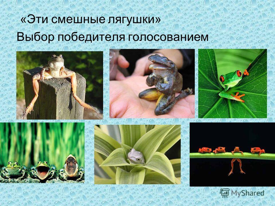 «Эти смешные лягушки» Выбор победителя голосованием