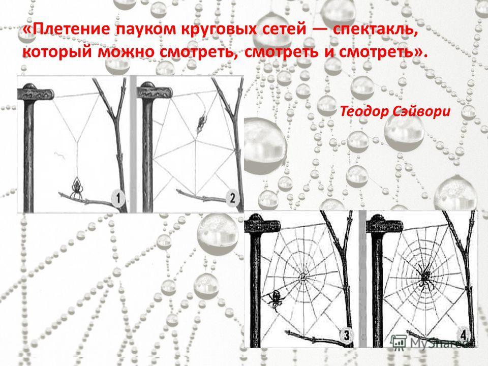 «Плетение пауком круговых сетей спектакль, который можно смотреть, смотреть и смотреть». Теодор Сэйвори