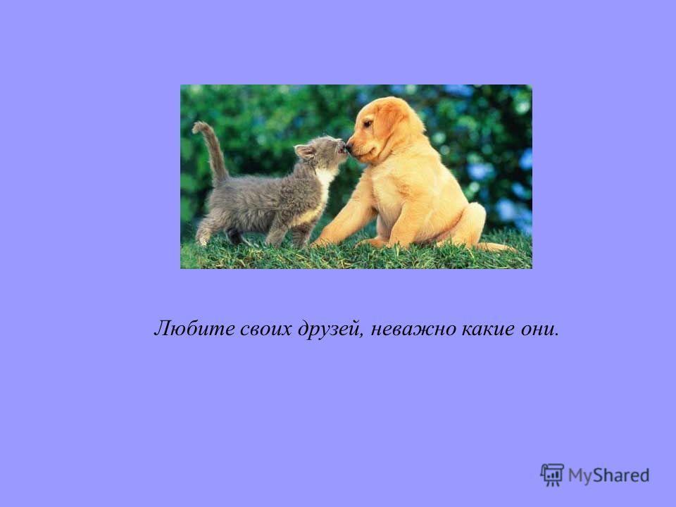 Любите своих друзей, неважно какие они.