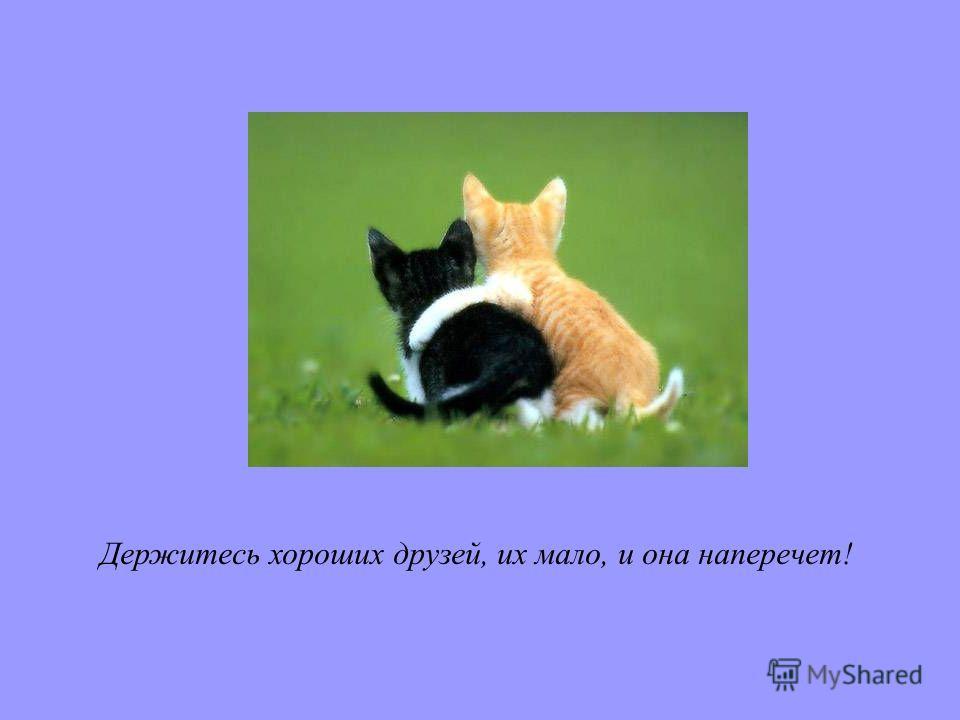 Держитесь хороших друзей, их мало, и она наперечет!