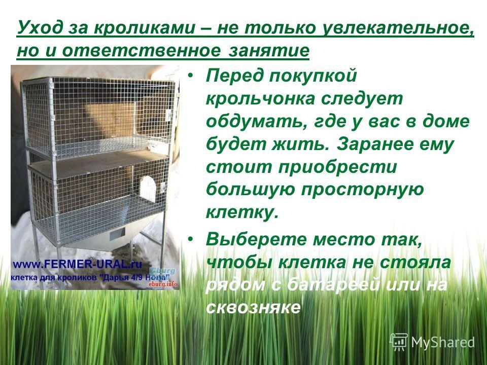 Уход за кроликами – не только увлекательное, но и ответственное занятие Перед покупкой крольчонка следует обдумать, где у вас в доме будет жить. Заранее ему стоит приобрести большую просторную клетку. Выберете место так, чтобы клетка не стояла рядом