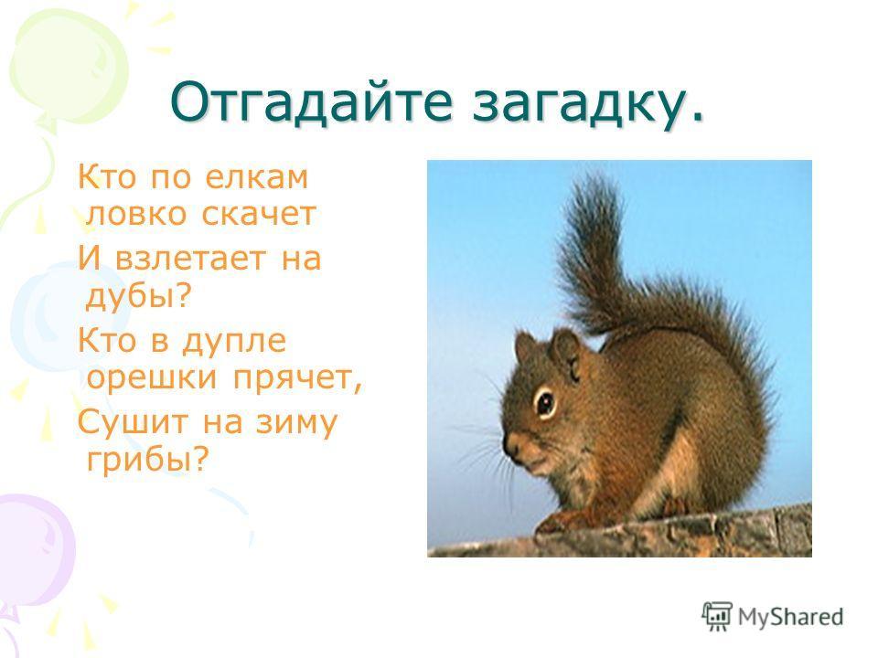 Отгадайте загадку. Кто по елкам ловко скачет И взлетает на дубы? Кто в дупле орешки прячет, Сушит на зиму грибы?