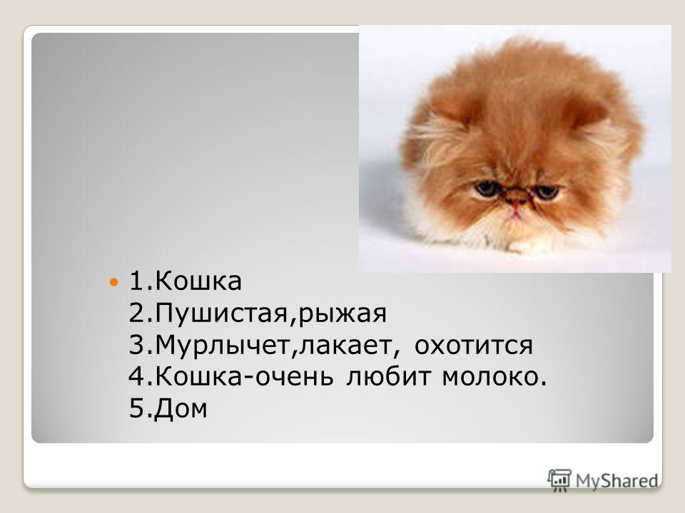 1.Кошка 2.Пушистая,рыжая 3.Мурлычет,лакает, охотится 4.Кошка-очень любит молоко. 5.Дом