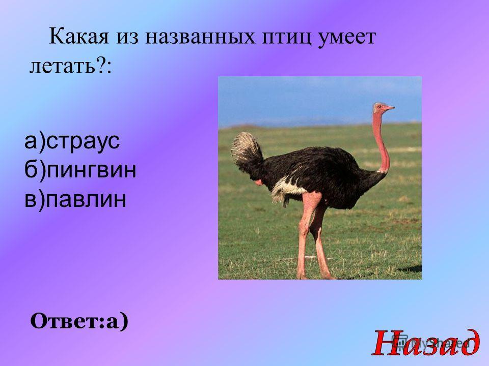 Какая из названных птиц умеет летать?: Ответ:а) а)страус б)пингвин в)павлин
