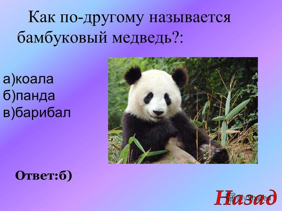 Как по-другому называется бамбуковый медведь?: Ответ:б) а)коала б)панда в)барибал
