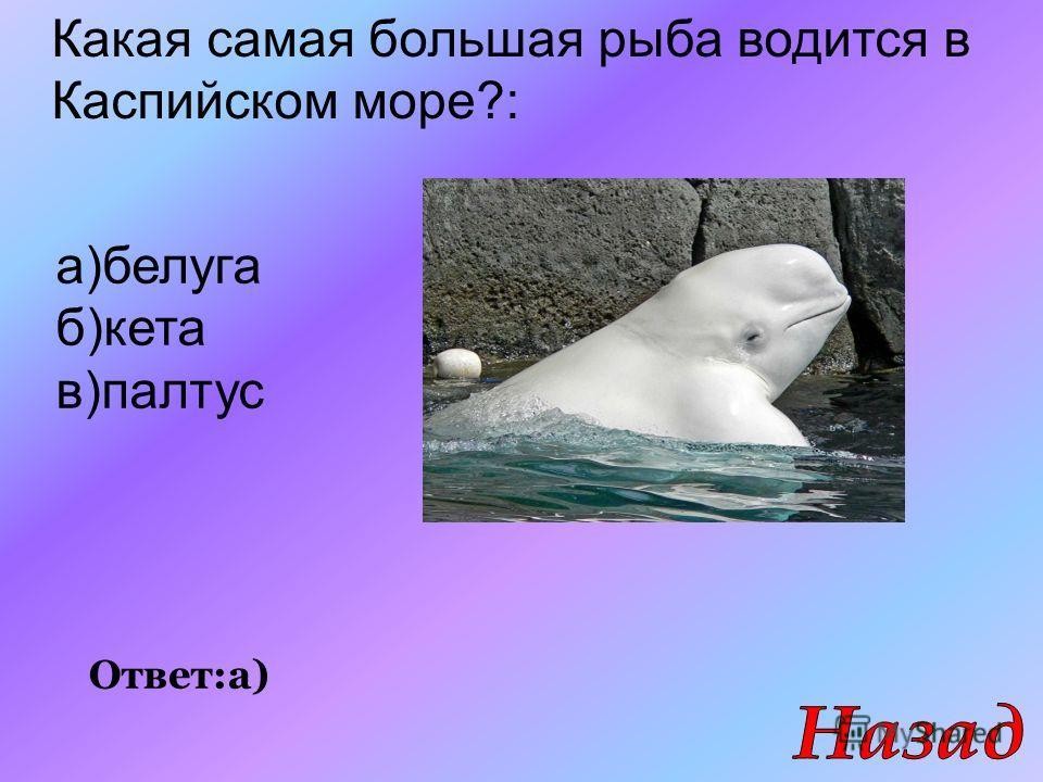 Ответ:а) Какая самая большая рыба водится в Каспийском море?: а)белуга б)кета в)палтус