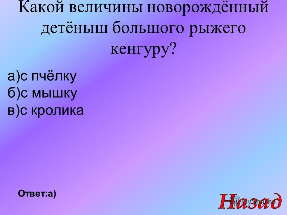 Какой величины новорождённый детёныш большого рыжего кенгуру? а)с пчёлку б)с мышку в)с кролика Ответ:а)