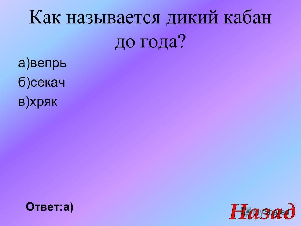 Как называется дикий кабан до года? а)вепрь б)секач в)хряк Ответ:а)