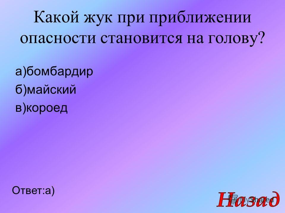 Какой жук при приближении опасности становится на голову? а)бомбардир б)майский в)короед Ответ:а)