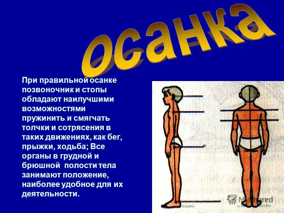 При правильной осанке позвоночник и стопы обладают наилучшими возможностями пружинить и смягчать толчки и сотрясения в таких движениях, как бег, прыжки, ходьба; Все органы в грудной и брюшной полости тела занимают положение, наиболее удобное для их д
