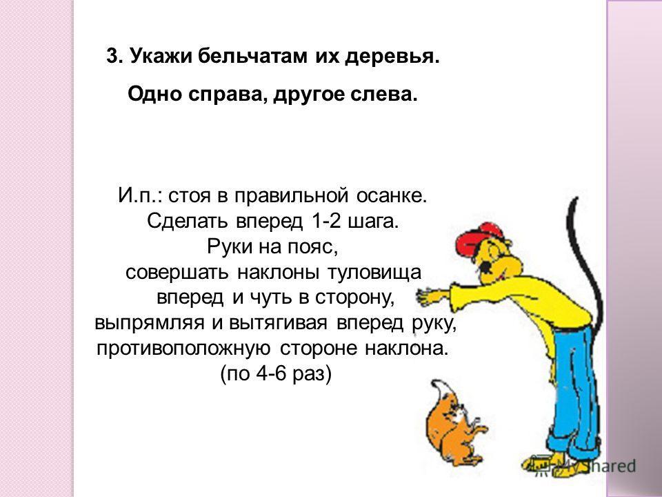 3. Укажи бельчатам их деревья. Одно справа, другое слева. И.п.: стоя в правильной осанке. Сделать вперед 1-2 шага. Руки на пояс, совершать наклоны туловища вперед и чуть в сторону, выпрямляя и вытягивая вперед руку, противоположную стороне наклона. (