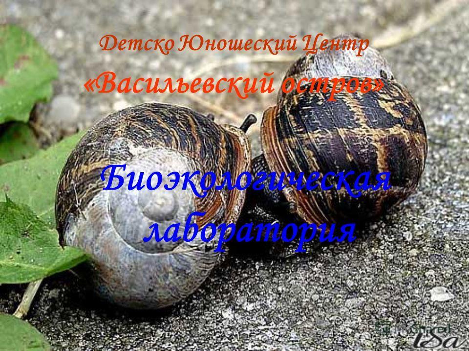 Детско Юношеский Центр «Васильевский остров» Биоэкологическая лаборатория