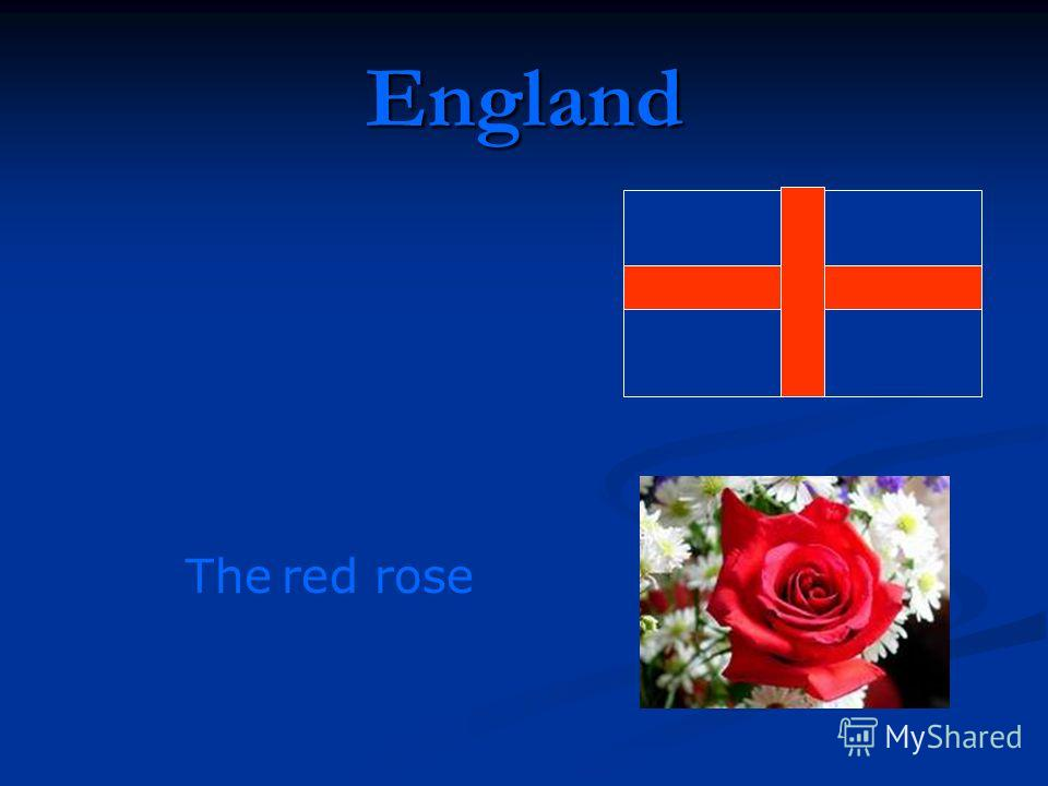 England The red rose