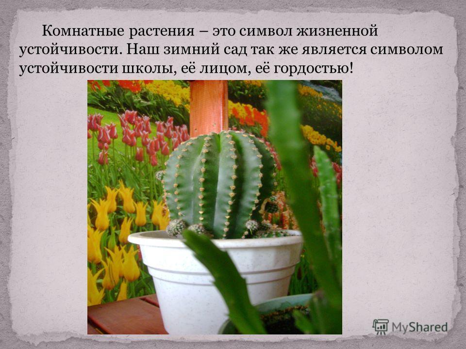Комнатные растения – это символ жизненной устойчивости. Наш зимний сад так же является символом устойчивости школы, её лицом, её гордостью!