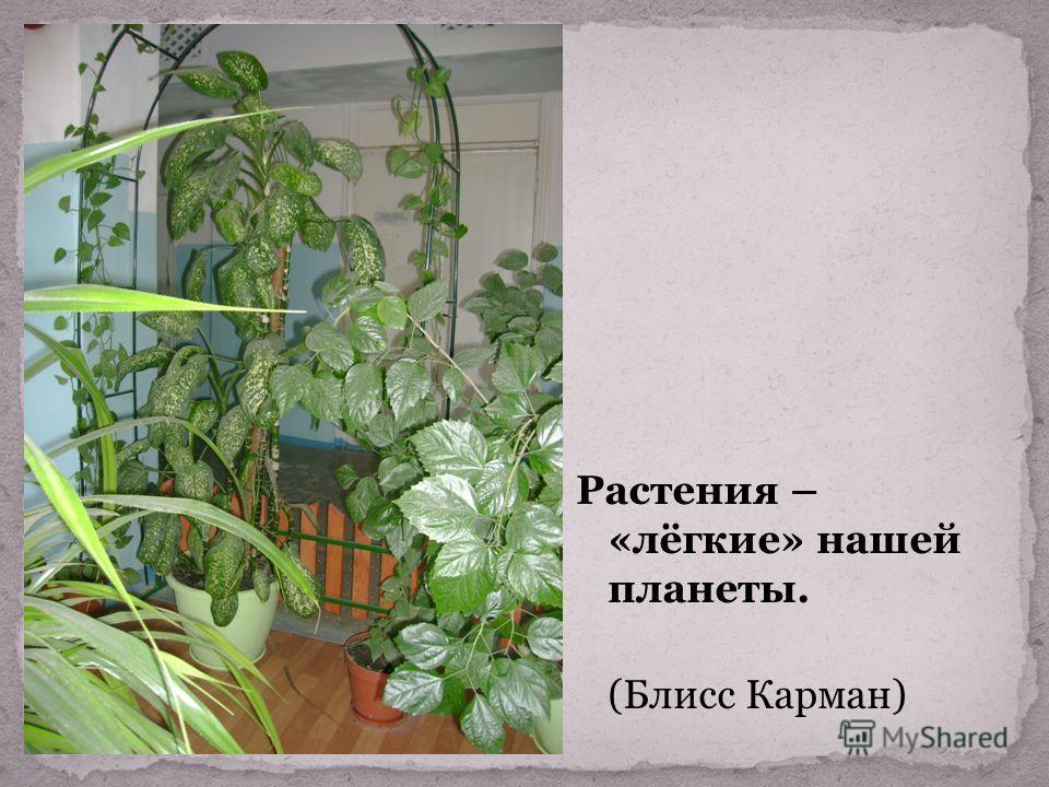 Растения – «лёгкие» нашей планеты. (Блисс Карман)