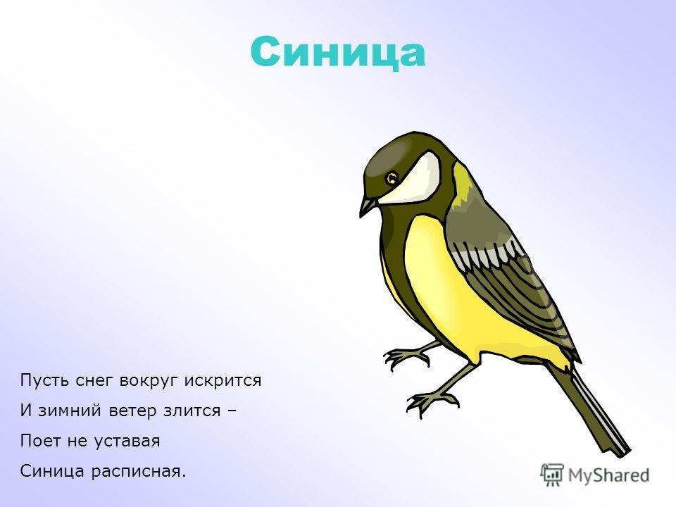 Пингвин Не летают птицы эти, Но летать они хотят И подолгу на рассвете В небо низкое глядят.