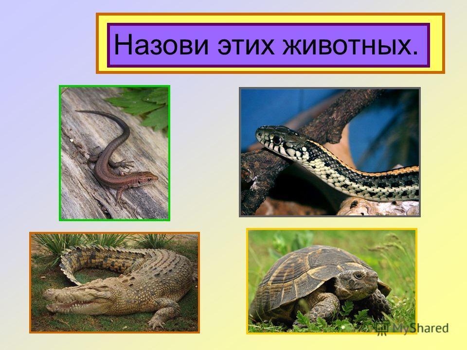 Это пресмыкающиеся. Назови этих животных.