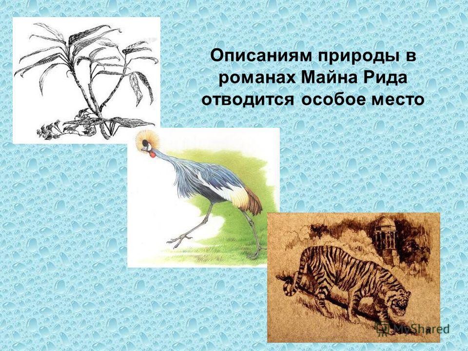 Описаниям природы в романах Майна Рида отводится особое место