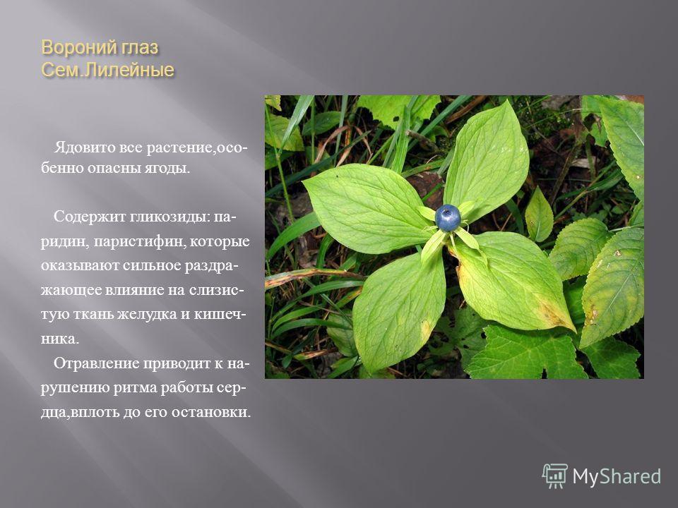 Вороний глаз Сем. Лилейные Ядовито все растение, осо - бенно опасны ягоды. Содержит гликозиды : па - ридин, паристифин, которые оказывают сильное раздра - жающее влияние на слизис - тую ткань желудка и кишеч - ника. Отравление приводит к на - рушению