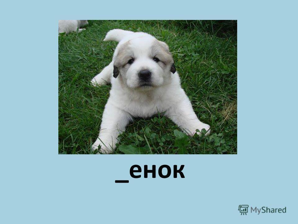 _енок Щ