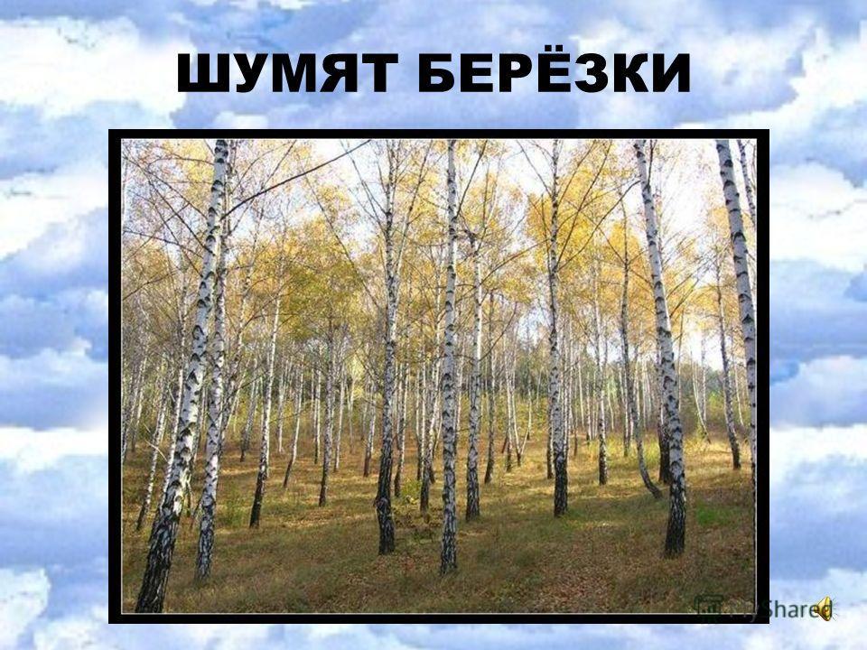 ШУМЯТ БЕРЁЗКИ