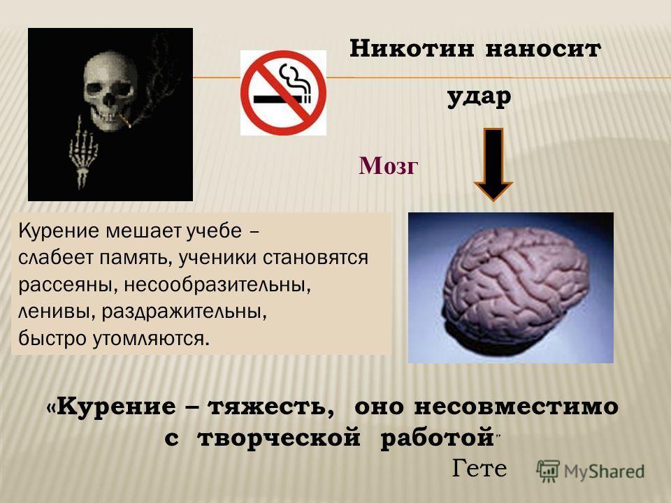 Мозг Никотин наносит удар Курение мешает учебе – слабеет память, ученики становятся рассеяны, несообразительны, ленивы, раздражительны, быстро утомляются. «Курение – тяжесть, оно несовместимо с творческой работой Гете