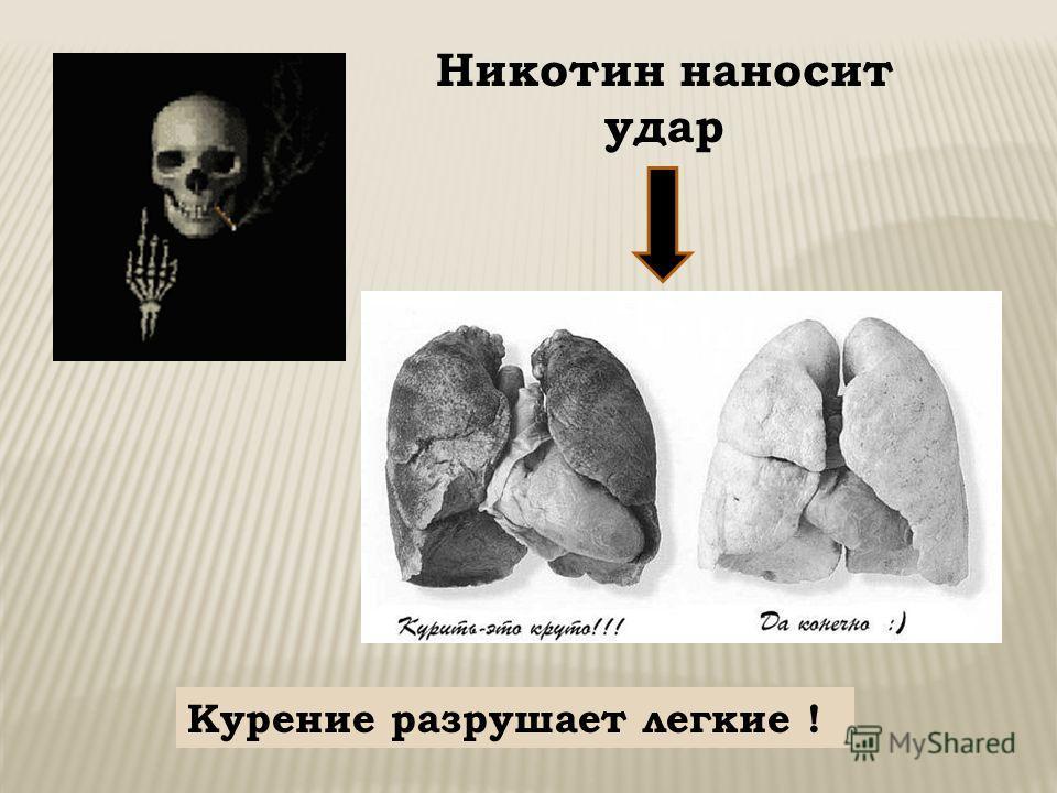 Никотин наносит удар Курение разрушает легкие !