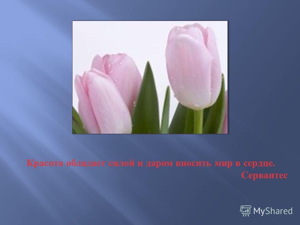 Красота обладает силой и даром вносить мир в сердце. Сервантес