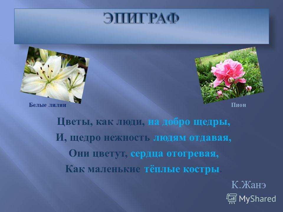 Цветы, как люди, на добро щедры, И, щедро нежность людям отдавая, Они цветут, сердца отогревая, Как маленькие тёплые костры. К. Жанэ Белые лилии Пион