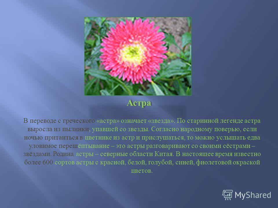 Астра В переводе с греческого « астра » означает « звезда ». По старинной легенде астра выросла из пылинки, упавшей со звезды. Согласно народному поверью, если ночью притаиться в цветнике из астр и прислушаться, то можно услышать едва уловимое перешё