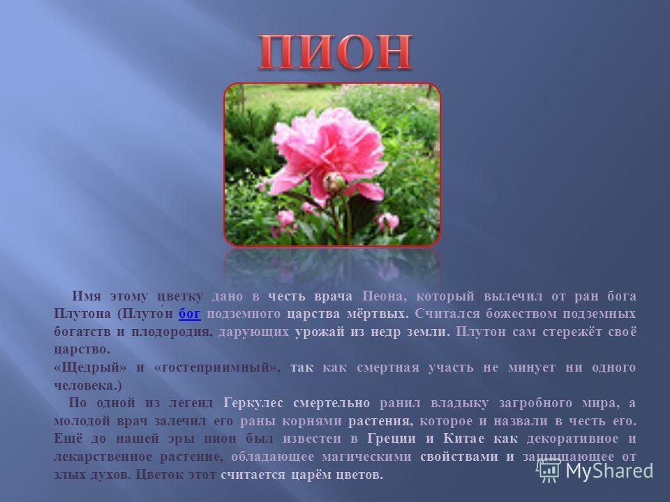 Имя этому цветку дано в честь врача Пеона, который вылечил от ран бога Плутона ( Плутон бог подземного царства мёртвых. Считался божеством подземных богатств и плодородия, дарующих урожай из недр земли. Плутон сам стережёт своё царство. бог « Щедрый