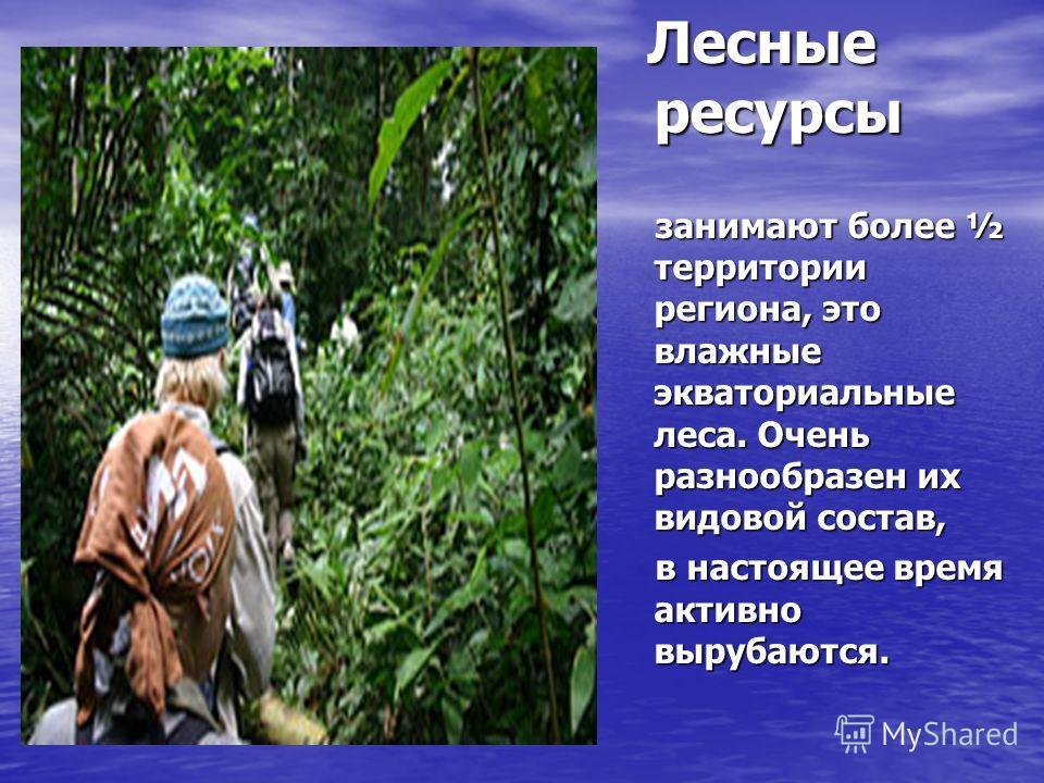 Лесные ресурсы Лесные ресурсы занимают более ½ территории региона, это влажные экваториальные леса. Очень разнообразен их видовой состав, занимают более ½ территории региона, это влажные экваториальные леса. Очень разнообразен их видовой состав, в на