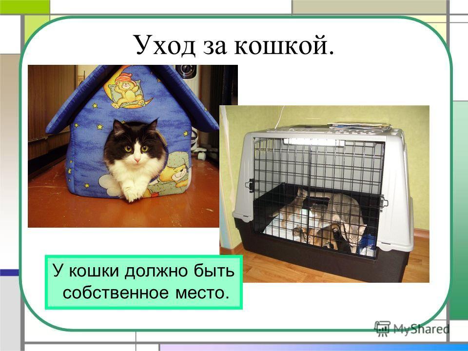Уход за кошкой. У кошки должно быть собственное место.