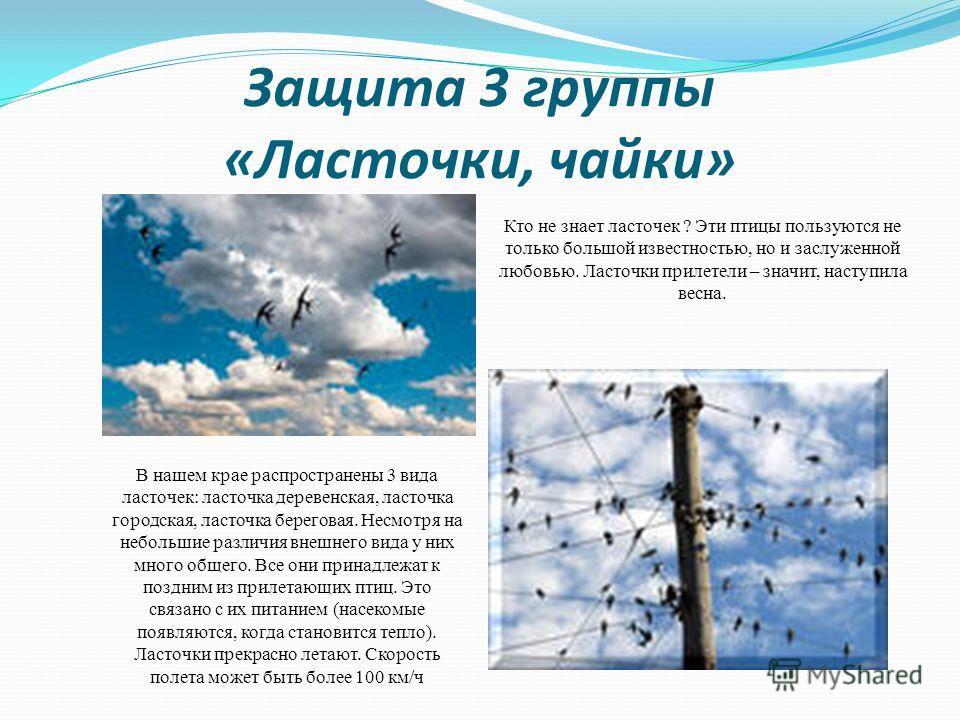 Защита 3 группы «Ласточки, чайки» Кто не знает ласточек ? Эти птицы пользуются не только большой известностью, но и заслуженной любовью. Ласточки прилетели – значит, наступила весна. В нашем крае распространены 3 вида ласточек: ласточка деревенская,