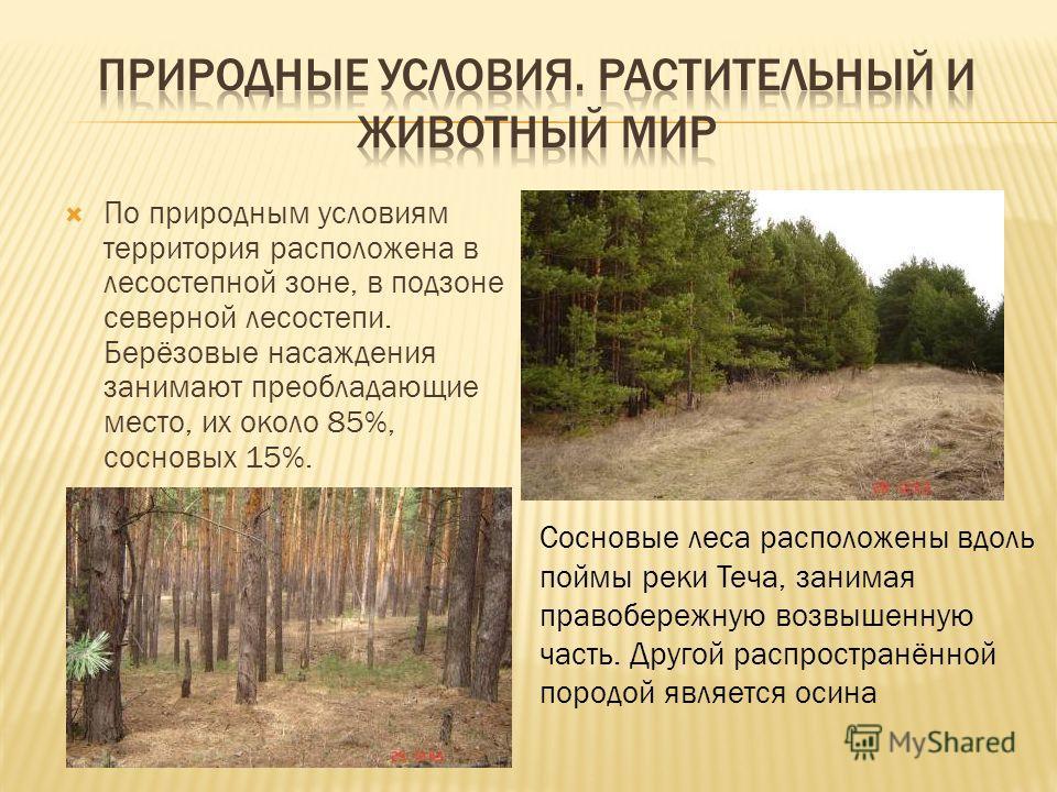 По природным условиям территория расположена в лесостепной зоне, в подзоне северной лесостепи. Берёзовые насаждения занимают преобладающие место, их около 85%, сосновых 15%. Сосновые леса расположены вдоль поймы реки Теча, занимая правобережную возвы