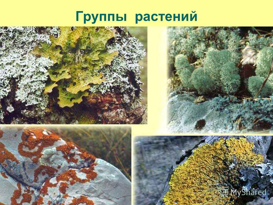 Группы растений