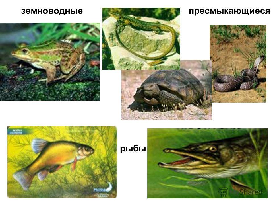 земноводныепресмыкающиеся рыбы