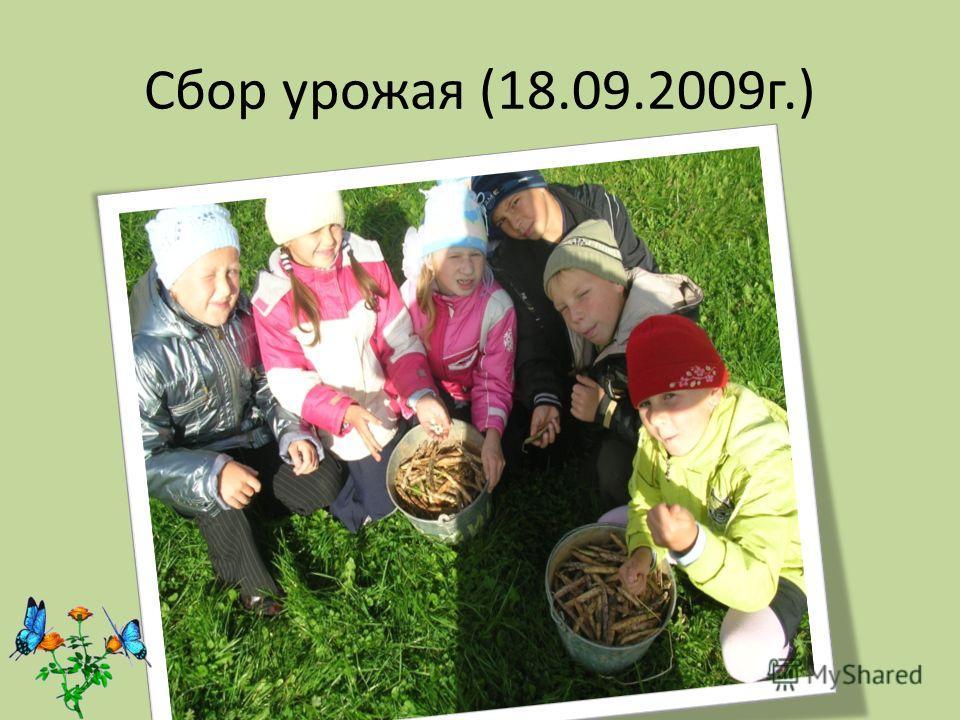 Сбор урожая (18.09.2009г.)
