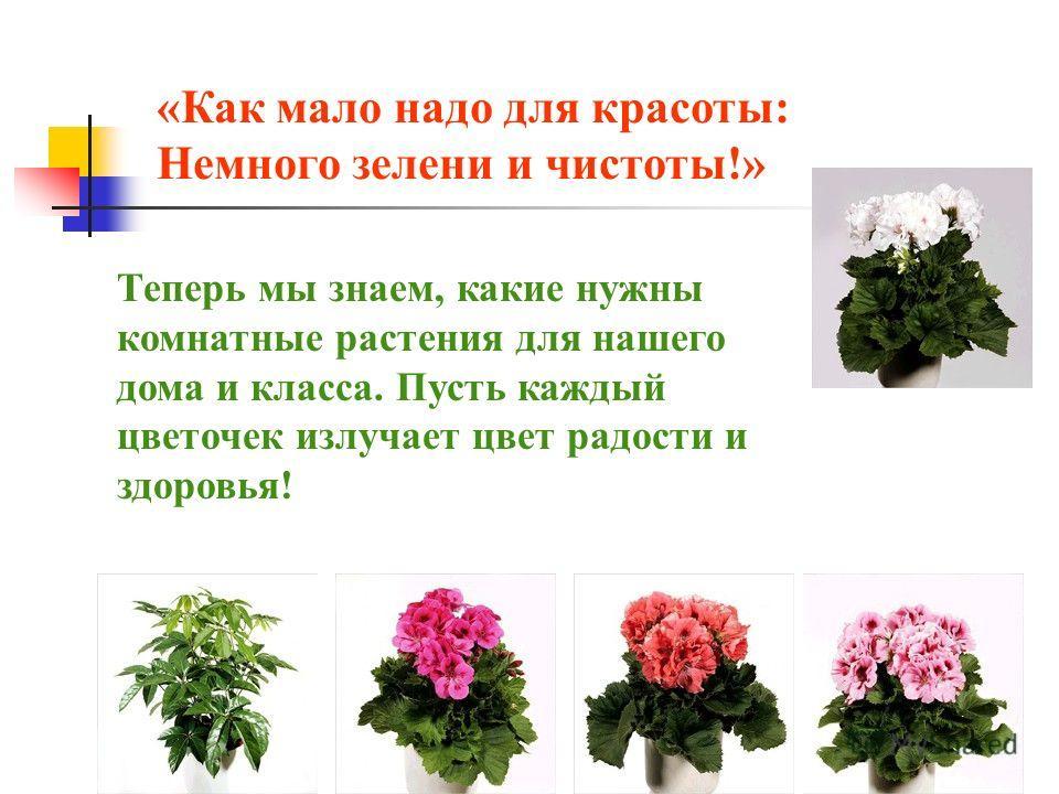 «Как мало надо для красоты: Немного зелени и чистоты!» Теперь мы знаем, какие нужны комнатные растения для нашего дома и класса. Пусть каждый цветочек излучает цвет радости и здоровья!