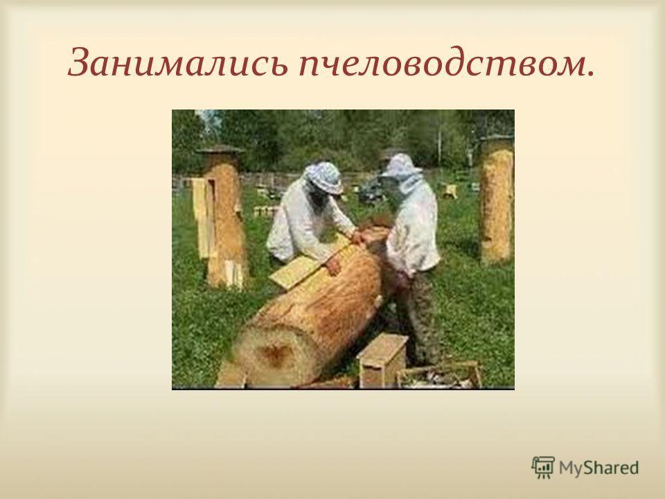 Занимались пчеловодством.