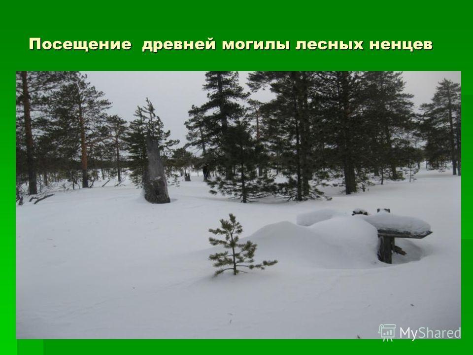 13 Посещение древней могилы лесных ненцев